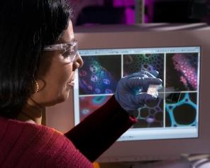 Sandia National Laboratory Seema