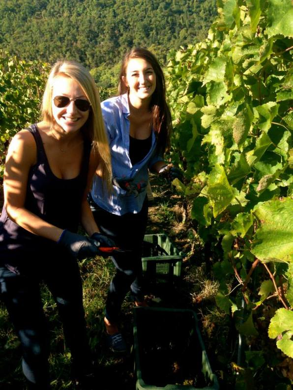 Rebecca and friend Harvesting Grapes in Tuscany Italy